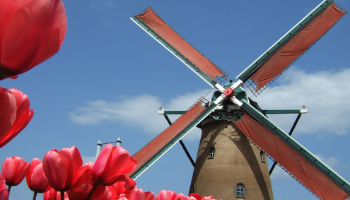 Photo of Windmill and Tulips